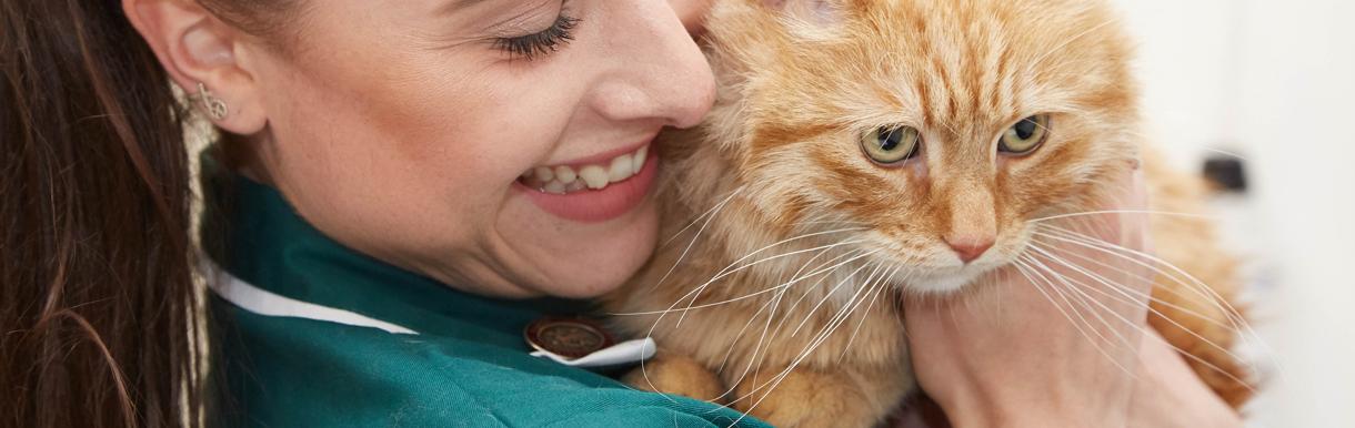 Senior cat clinics